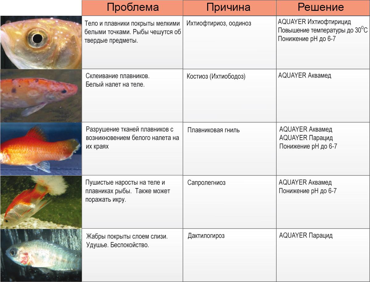Печень заболевания аквариумных