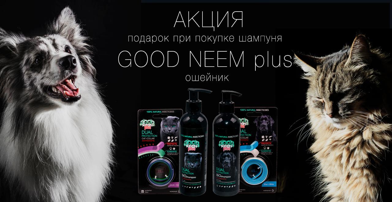 goog_neem+3_